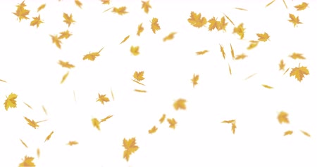 навес : Autumn yellow maple leaves. Are falling whirlwind down.