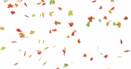 woodland : Red, orange, yellow and green maple leaves falling down. Autumn season. Stock Footage