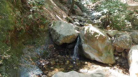 mohás : Uvas Canyon County Park is natural park is located in upper Uvas Canyon on the eastern side of the Santa Cruz Mountains, west of Morgan Hill, California. Stock mozgókép