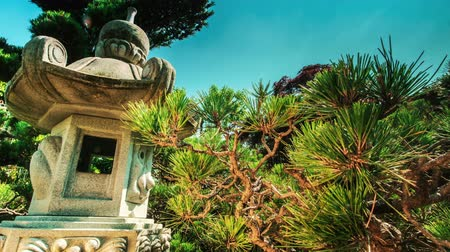 сады : Time lapse in a Japanese garden with traditional lantern and pine tree