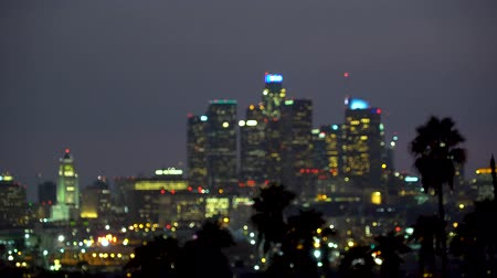 фокус : Downtown Los Angeles at night with palm trees in the foreground
