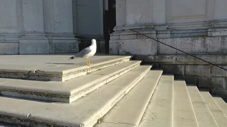 Seagull on the steps of the church in Venice, Italy