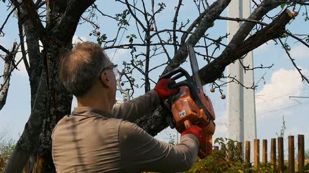 bahçıvan : The gardener cuts the old branches on a tree, using a chain saw. Stok Video