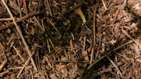 queen ant : The life of an ant hill in a summer forest.