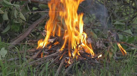 стартер : A small fire burns in the forest. Slow motion.