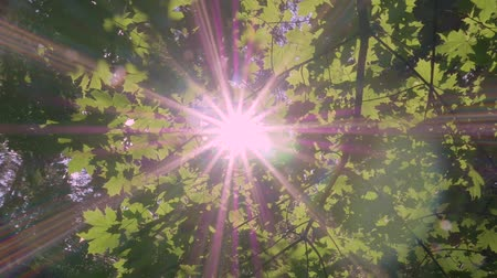 ascetic : Beautiful sun rays shine through the green foliage. Stock Footage
