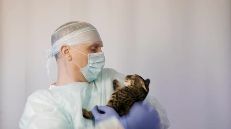 castração : Veterinarian makes inspection of a kitten. He is going to vaccinate him Stock Footage