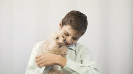 spanyel : The boy is hugging his beloved dog. Happy childhood.