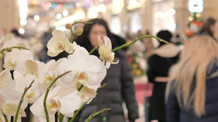 darovat : Festive atmosphere in the mall. In the foreground a decorative flower. Not in focus people walk and buy gifts.