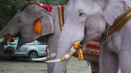 Аюттхая : Ayutthaya, Thailand - Dec 12 2018: Thourists feeding elephan at province Ayutthaya Thailand near Bangkok