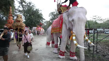 keeper : Ayutthaya, Thailand - Dec 12 2018: Thourists feeding elephan at province Ayutthaya Thailand near Bangkok