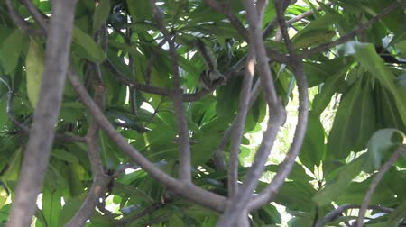 Squirrel on the tree Stockvideo