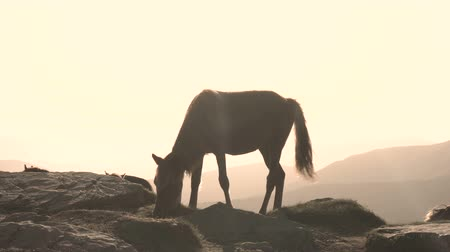 hoofed : Wild horse grazing in mountain meadows Stock Footage