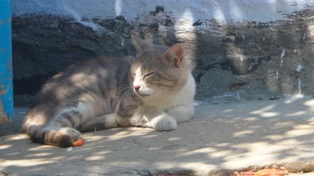 deslizamento : Old cat resting in shadow of plant