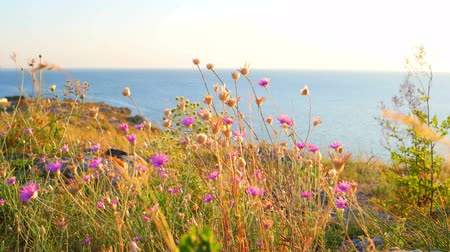brisa : Flowers flicker in the wind against calm sea and horizon line