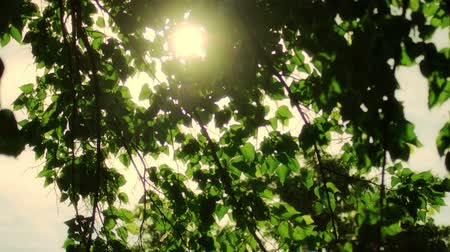 brilhar : Beautiful Sun shine through the blowing on wind tree green leaves. Blurred abstract bokeh with sun flare. Sunlight. Sunflare. Stock Footage