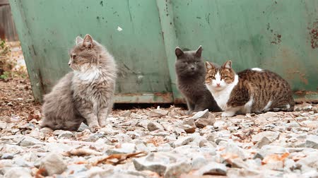 pieski : Group of alley cats sitting near trash and looking about.