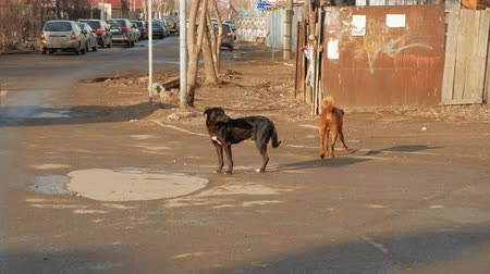astrakhan : Astrakhan, Russia 11 of April 2018: Stray pack of dogs walking on the street in the spring. Street dogs or homeless dogs and cars moving around.