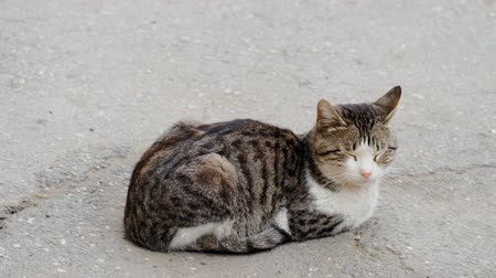 undomesticated cat : Cat Resting In The Street Side View