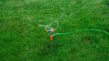 spraying : Lawn Sprinkler in Action. Garden Sprinkler Watering Grass. Automatic Sprinkler Above View.