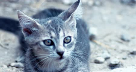 секунды : Handheld shot of tabby kitten playing