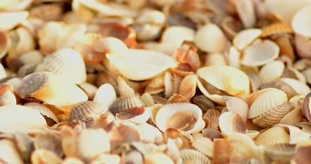 coletando : Many empty shells macro footage