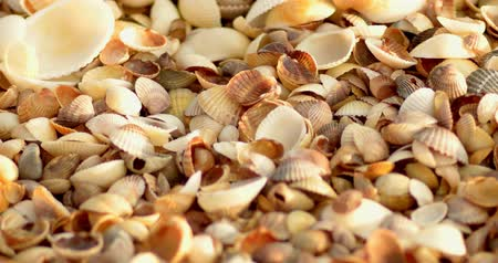 shellfish : Look at cover of seashells on sea coast in macro shallow DOF selective focus
