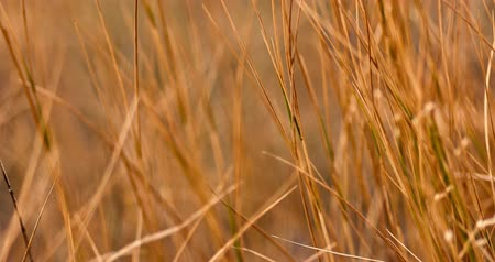 haywire : Dry grass macro very shallow dof handheld footage