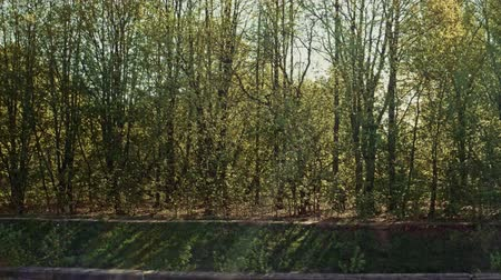 surroundings : Green Spring Forest on riverbank passing it along on boat Stock Footage