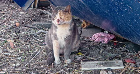 animal adoption : Senior calico cat breathing heavily while sitting on littered ground and looking around