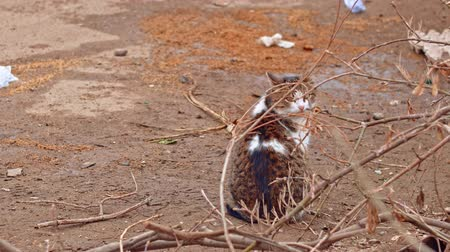 zbloudilý : Stray cat sitting on bare ground then look back, copyspace