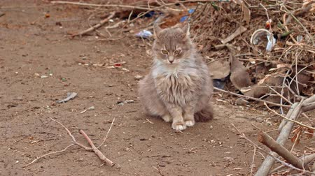 animal adoption : Cute fluffy cat ioutdoors sitting on bare ground