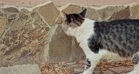 jump away : Homeless cat walking near wall in alert state