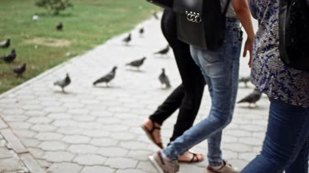 kismadár : People walking in front of pigeons on pavement in slow motion