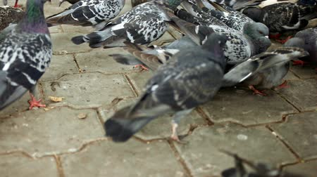 birdie : Birds fight for food in slow motion Stock Footage