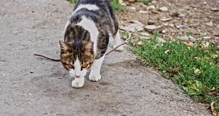 admission : Stray cat unbelieving looking at camera handheld outside shot Stock Footage
