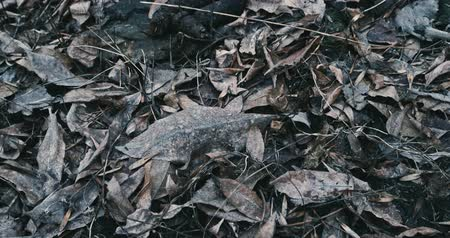 fetid : Human turd real one on the fallen leaves cover POV