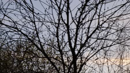 Tree silhouettes, dry branches in front of the sunset sky.