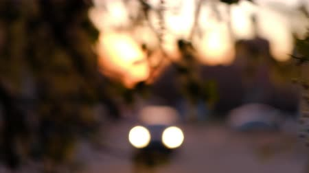 Defocused shooting of tree branches and blurred street in sunset time.