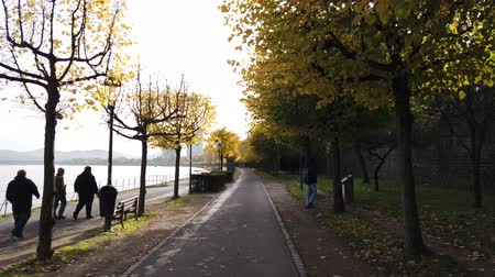 Bonn Germany, 06 November 2019: riding on Rhine embankment with lonely pedestrians . Sun blinking in branches of yellow trees 4k 50fps clip