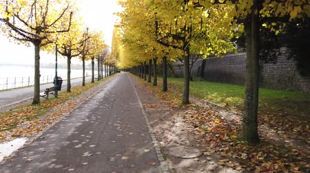 Bonn Germany, 06 November 2019: POV of riding on bicycle on sidewalk of Rhine embankment near wall with autumnal trees on both sides4k 50fps clip 影像素材