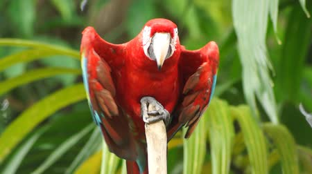 macaw : Parrot