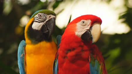 macaw : Macaw parrots