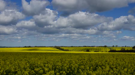 pasture land : Panoramic time-lapse of rape fields and cloud shadows