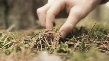 porcini mushrooms : Close up of a hand picking up a xerocomus from the ground Stock Footage