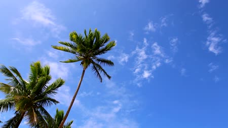 palm trees with blue sky and wispy clouds