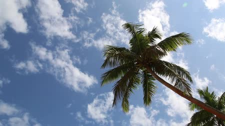 palm tree against blue sky with clouds