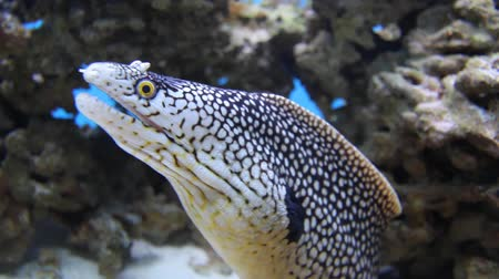 podwodny swiat : Close-up shot of aquarium fish