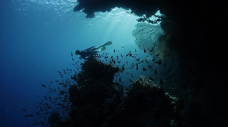 small group of animals : Free diver swimming underwater by the coral reef full of fish