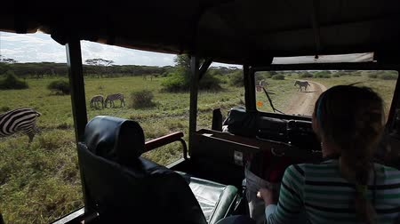 Car with tourists moves through savanna of Nairobi National Park. Shaky hand held camera Wideo